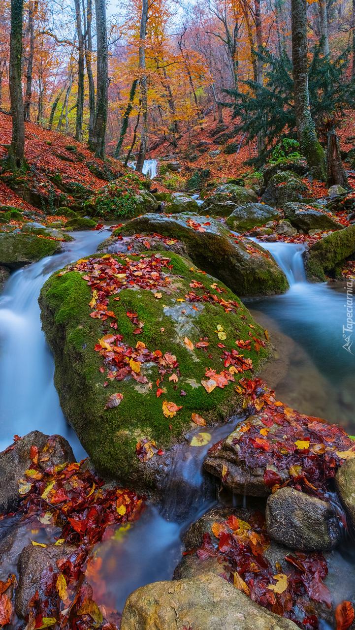 Kolorowe liście na głazach w rzece