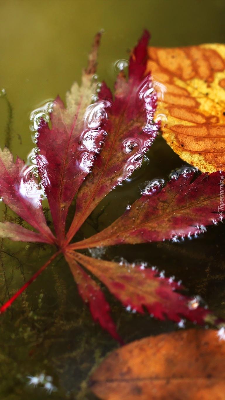 Kolorowe liście na wodzie