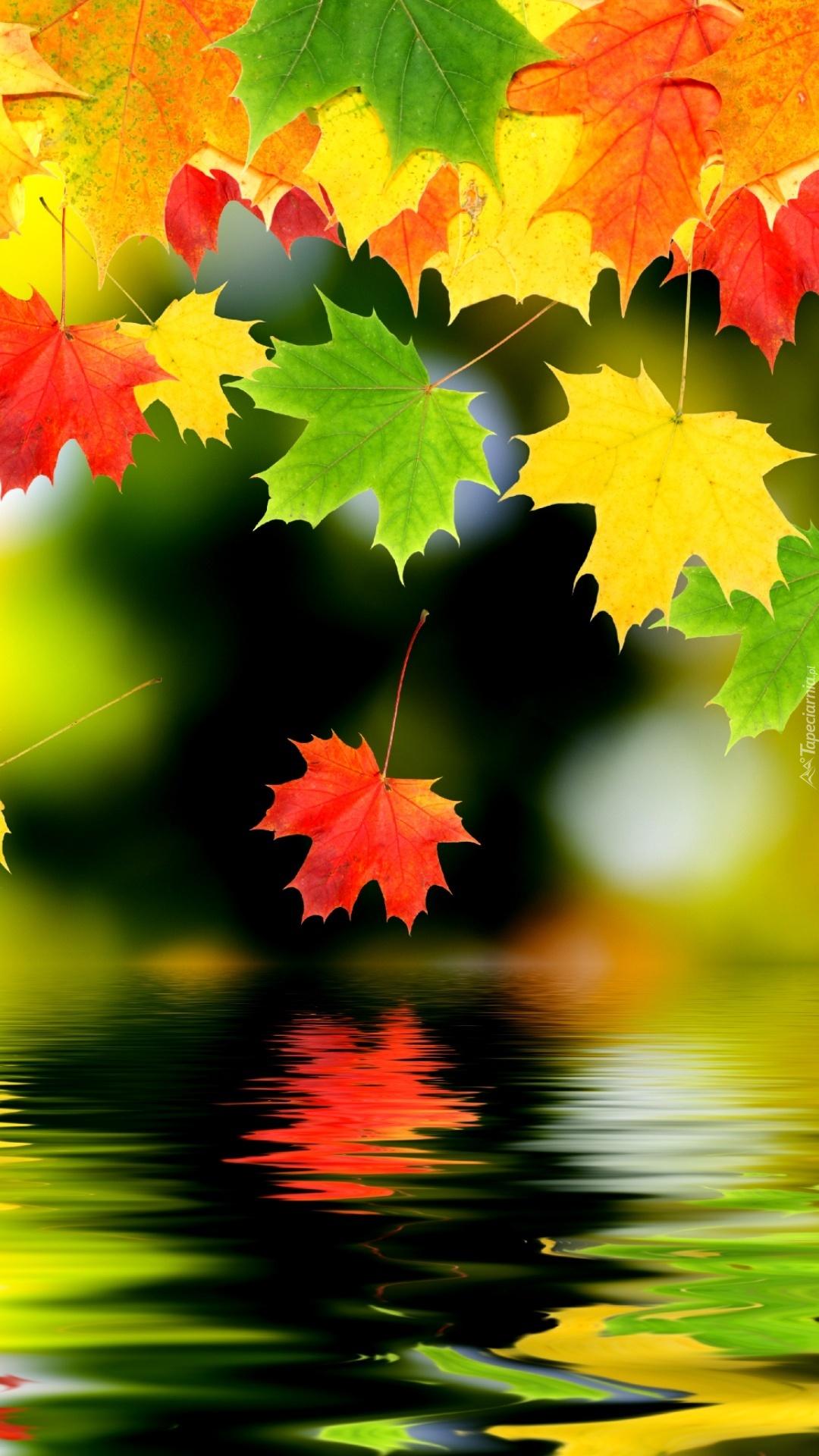 Kolorowe liście spadają do wody