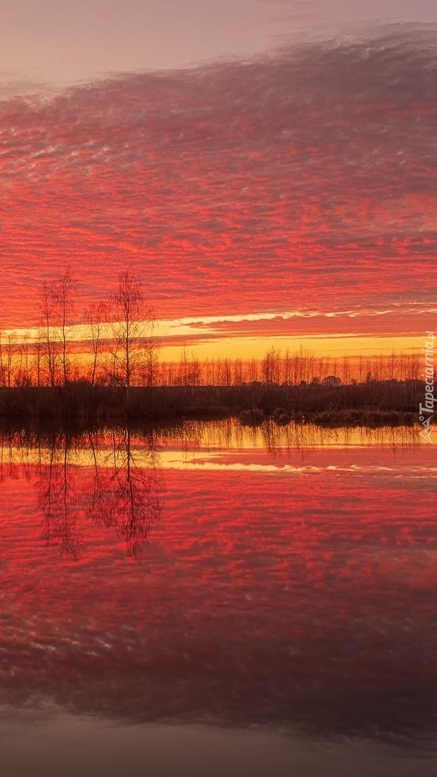 Kolorowe niebo i drzewa nad rzeką