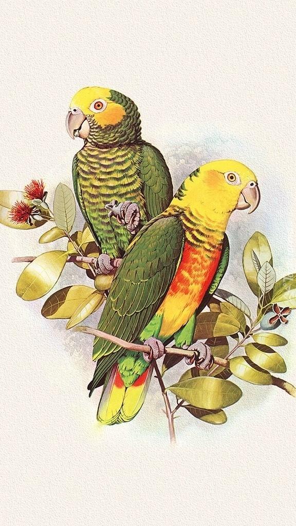 Kolorowe papugi według Edwarda Lear