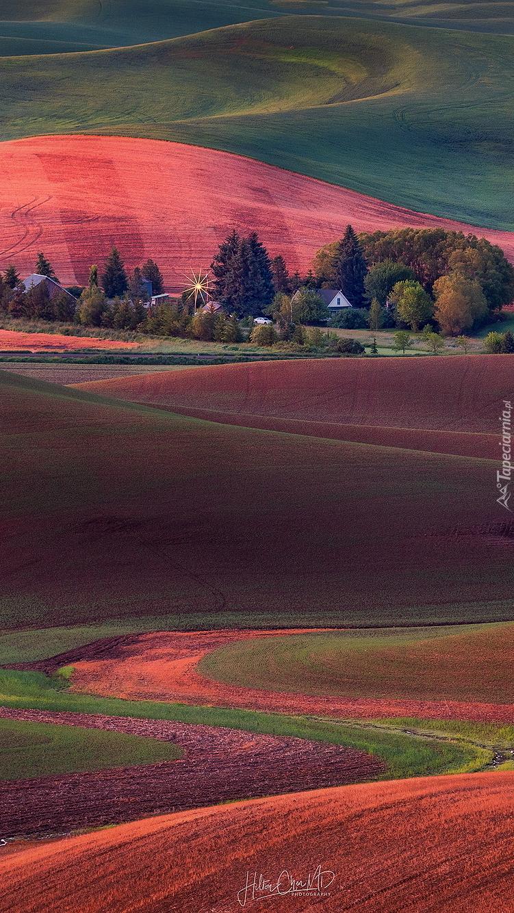 Kolorowe pola uprawne