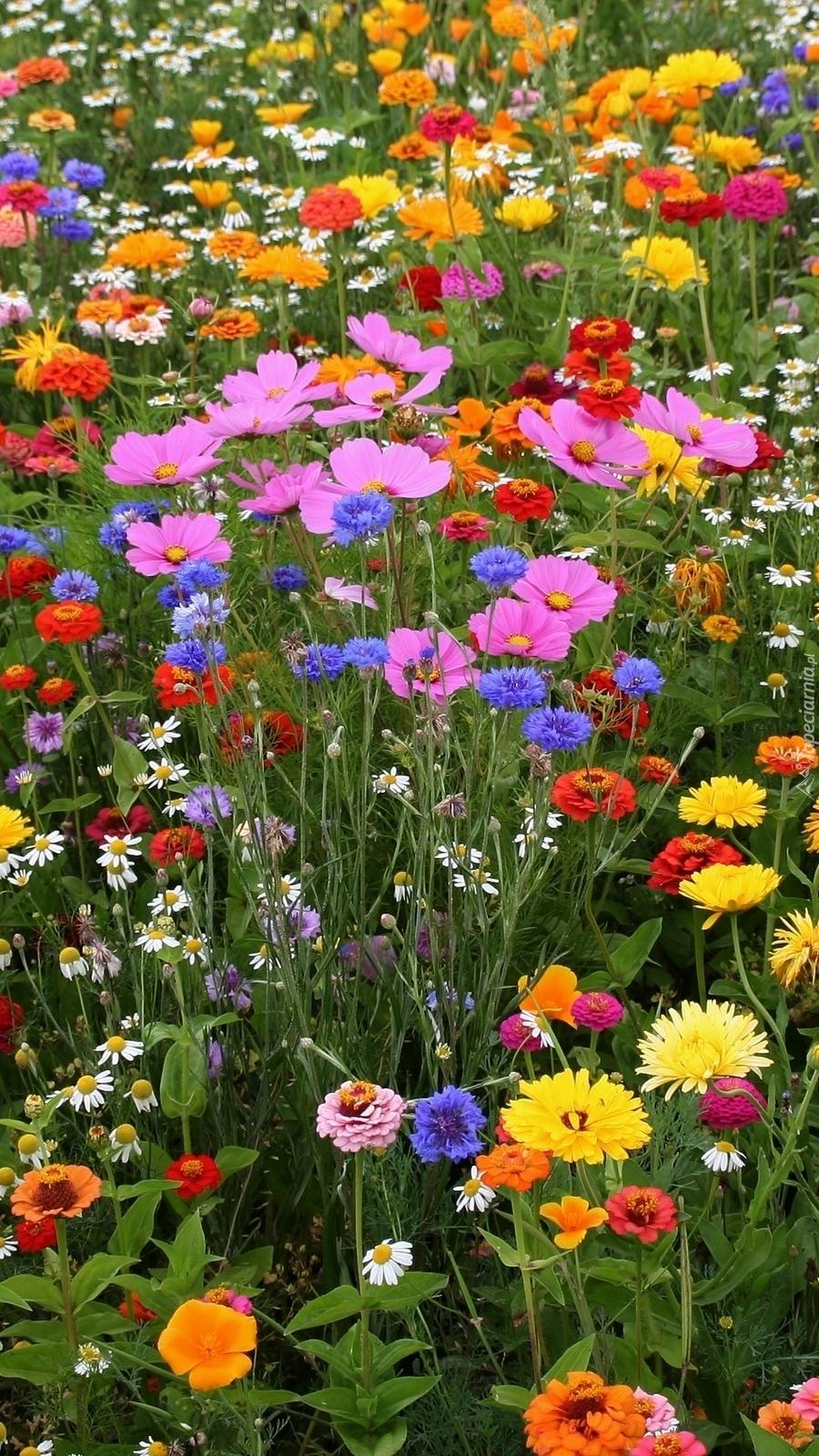 Kolorowe polne kwiaty na łące