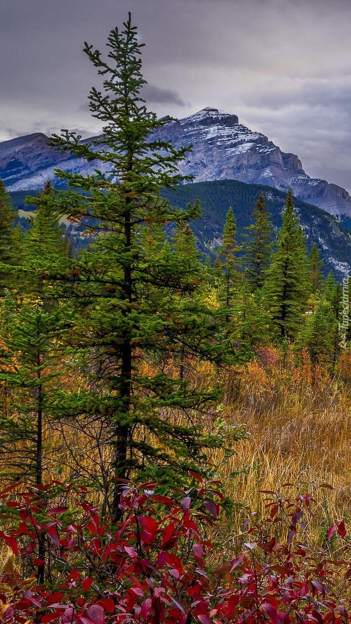 Kolorowe rośliny i drzewa na tle gór