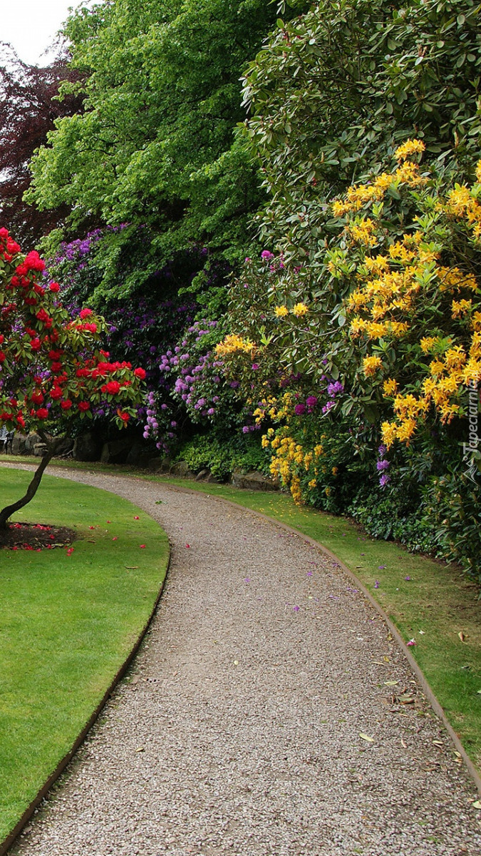 Kolorowe różaneczniki przy alejce w parku