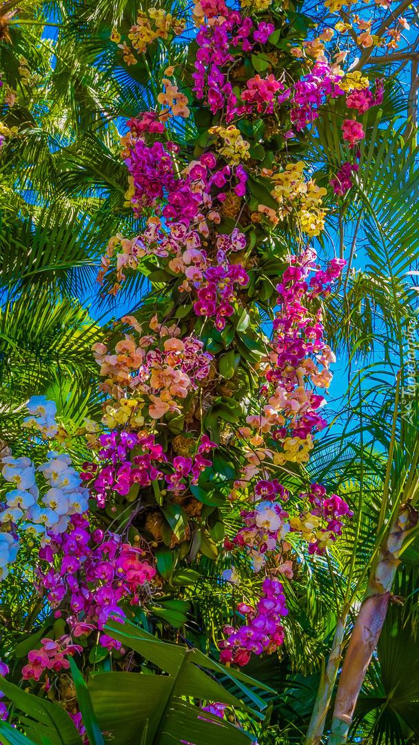 Kolorowe storczyki na drzewie