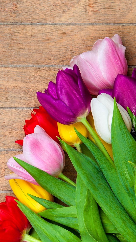 Kolorowe tulipany na desce