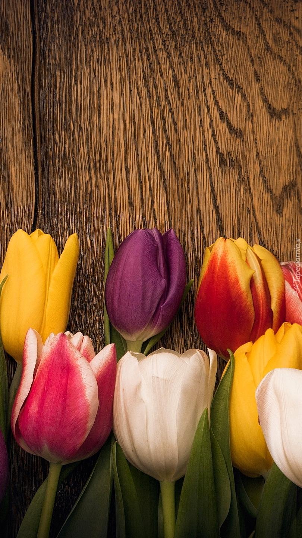 Kolorowe tulipany na drewnie