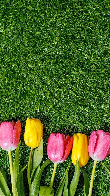 Kolorowe tulipany na trawie