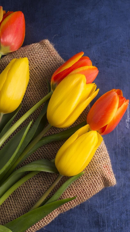 Kolorowe tulipany położone na worku