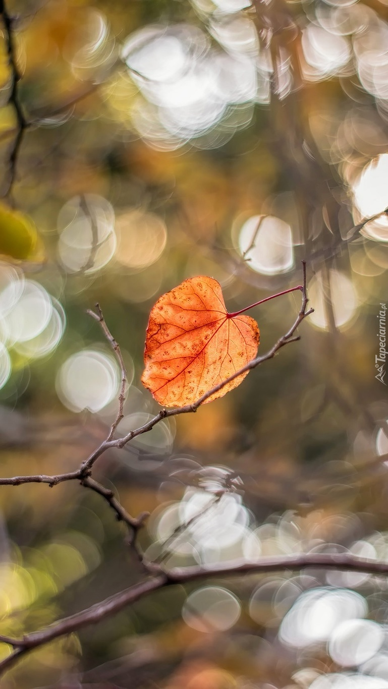 Kolorowy liść na gałązce