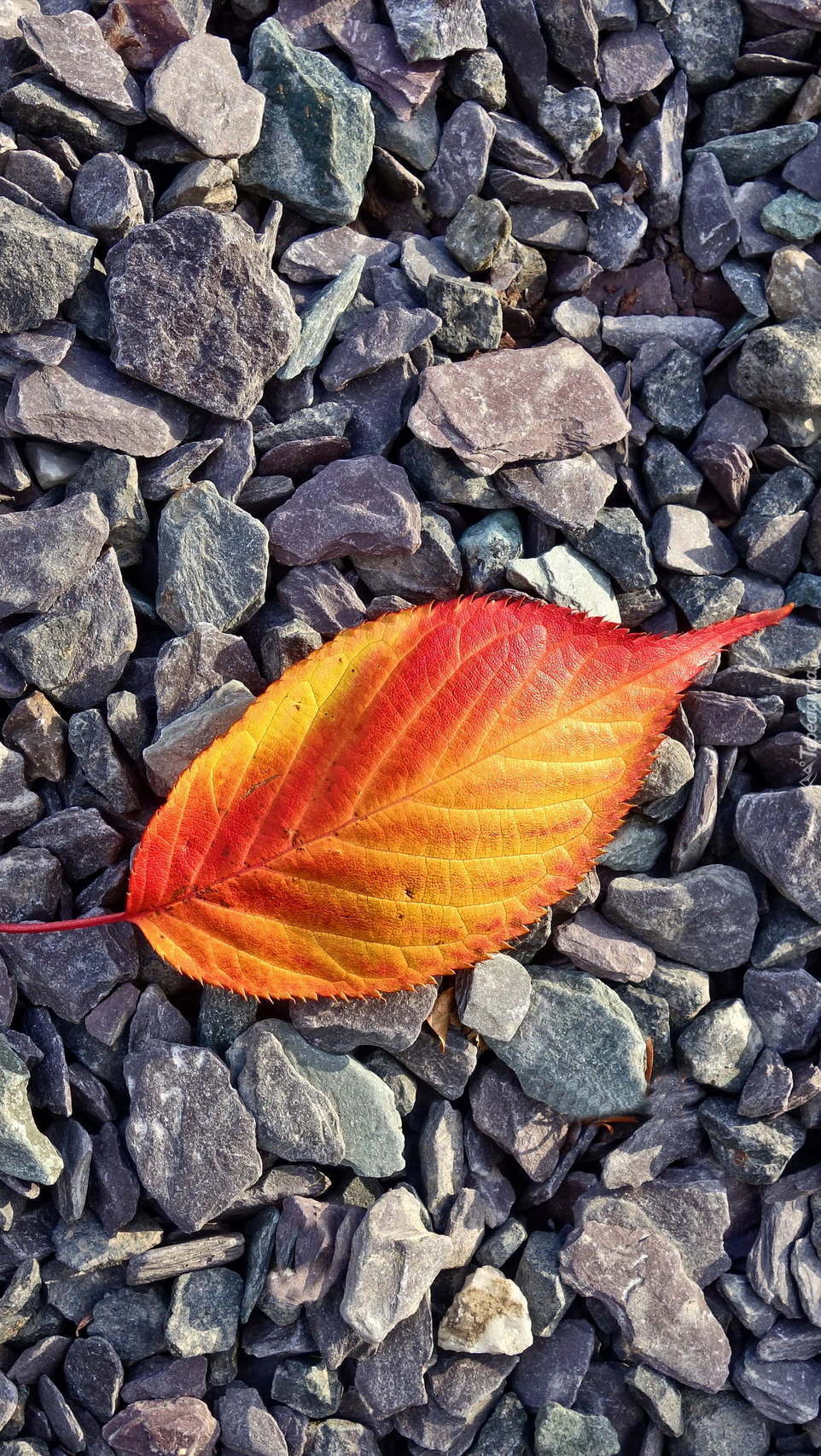 Kolorowy liść na kamykach