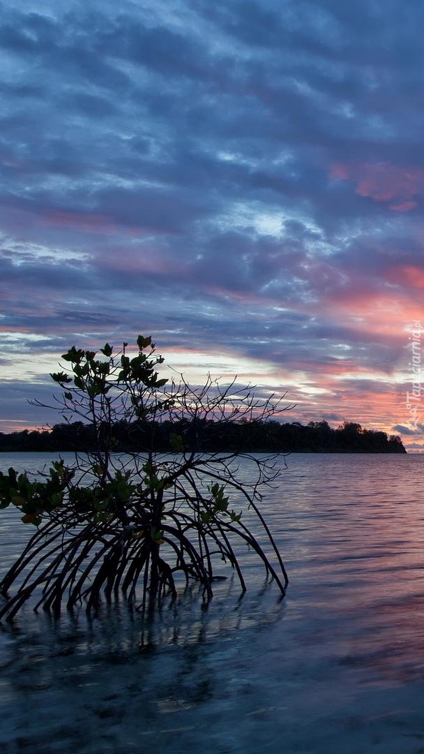 Kolorowy wschód słońca nad morzem