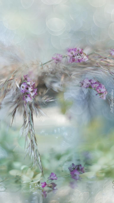 Kompozycja z suchych roślin i kwiatów
