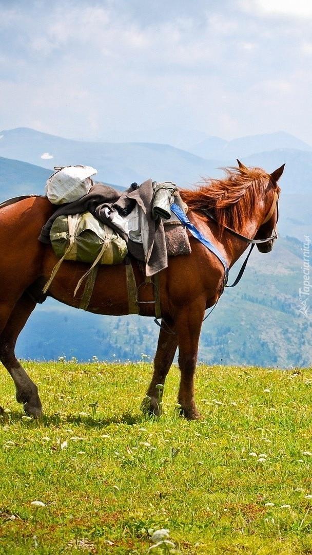 Koń na górskiej łące