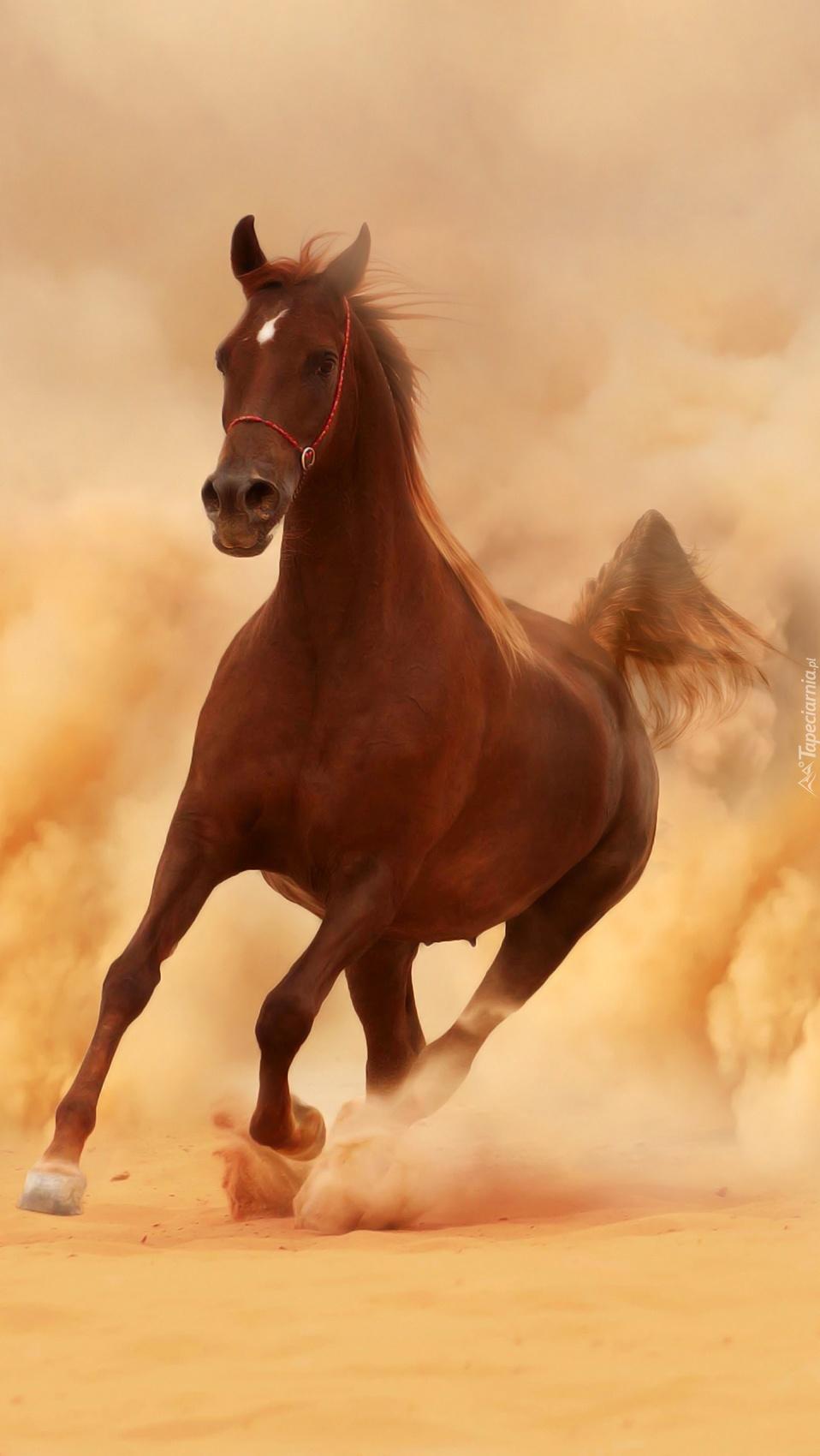 Koń na wybiegu