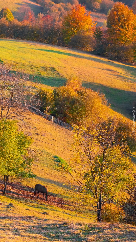 Koń pasący się pod jesiennymi drzewami