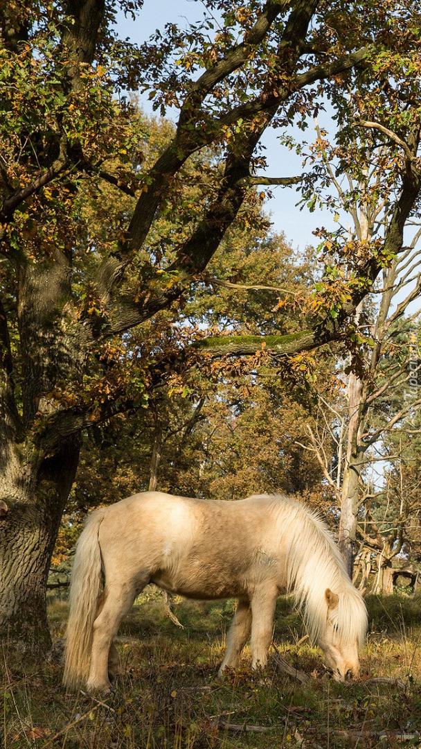 Koń pod drzewem