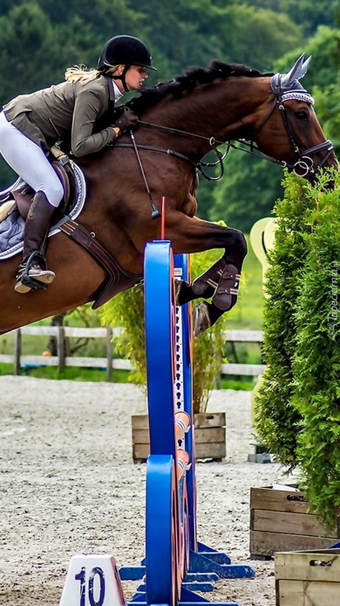 Koń pokonuje przeszkodę