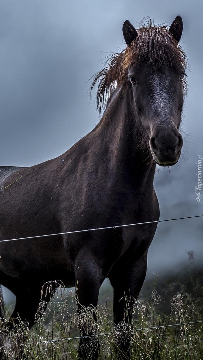Koń przy ogrodzeniu