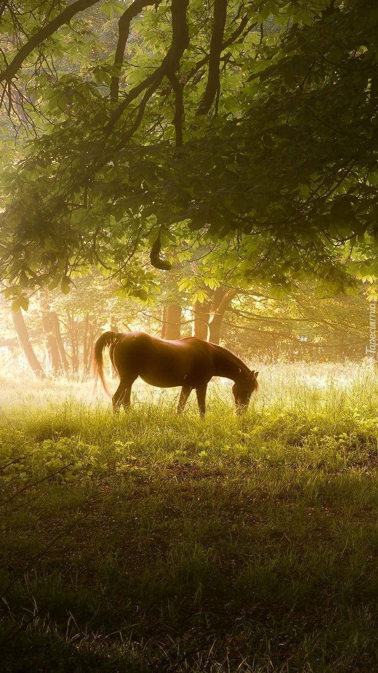 Koń sam w lesie