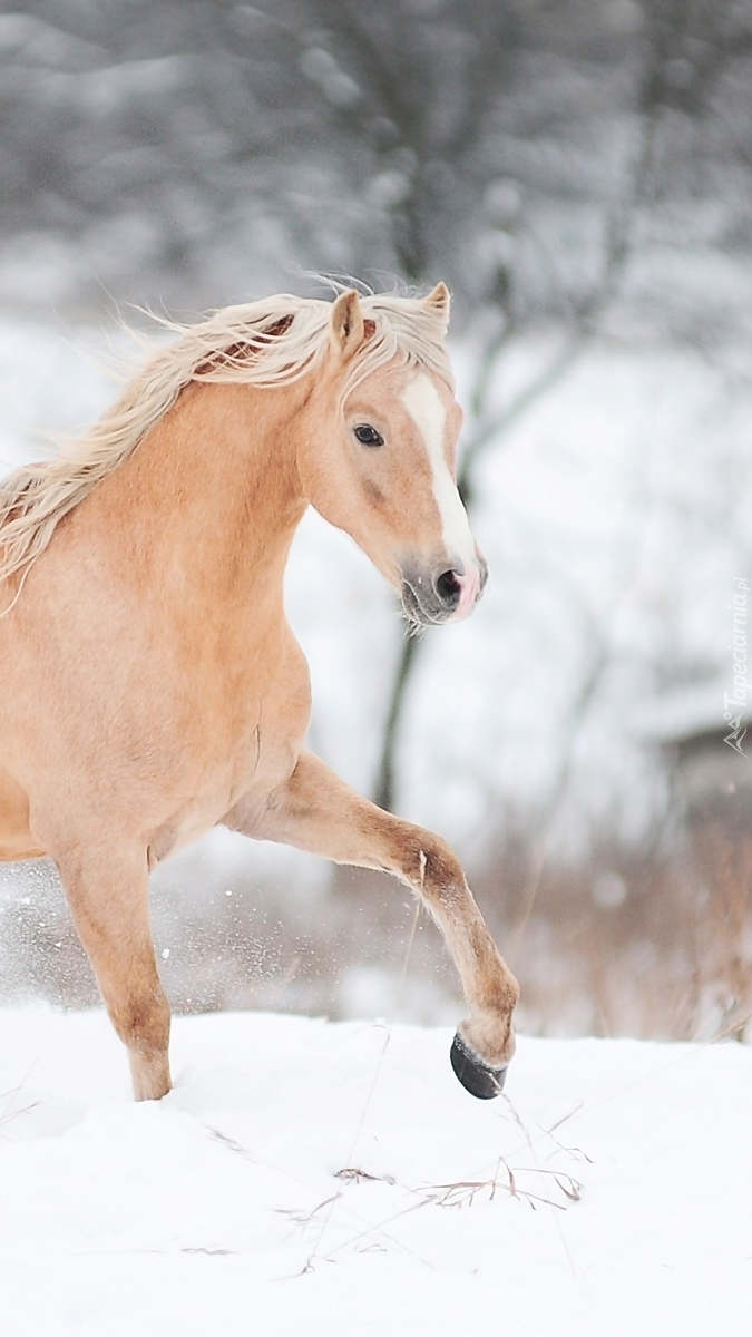 Koń w scenerii zimowej