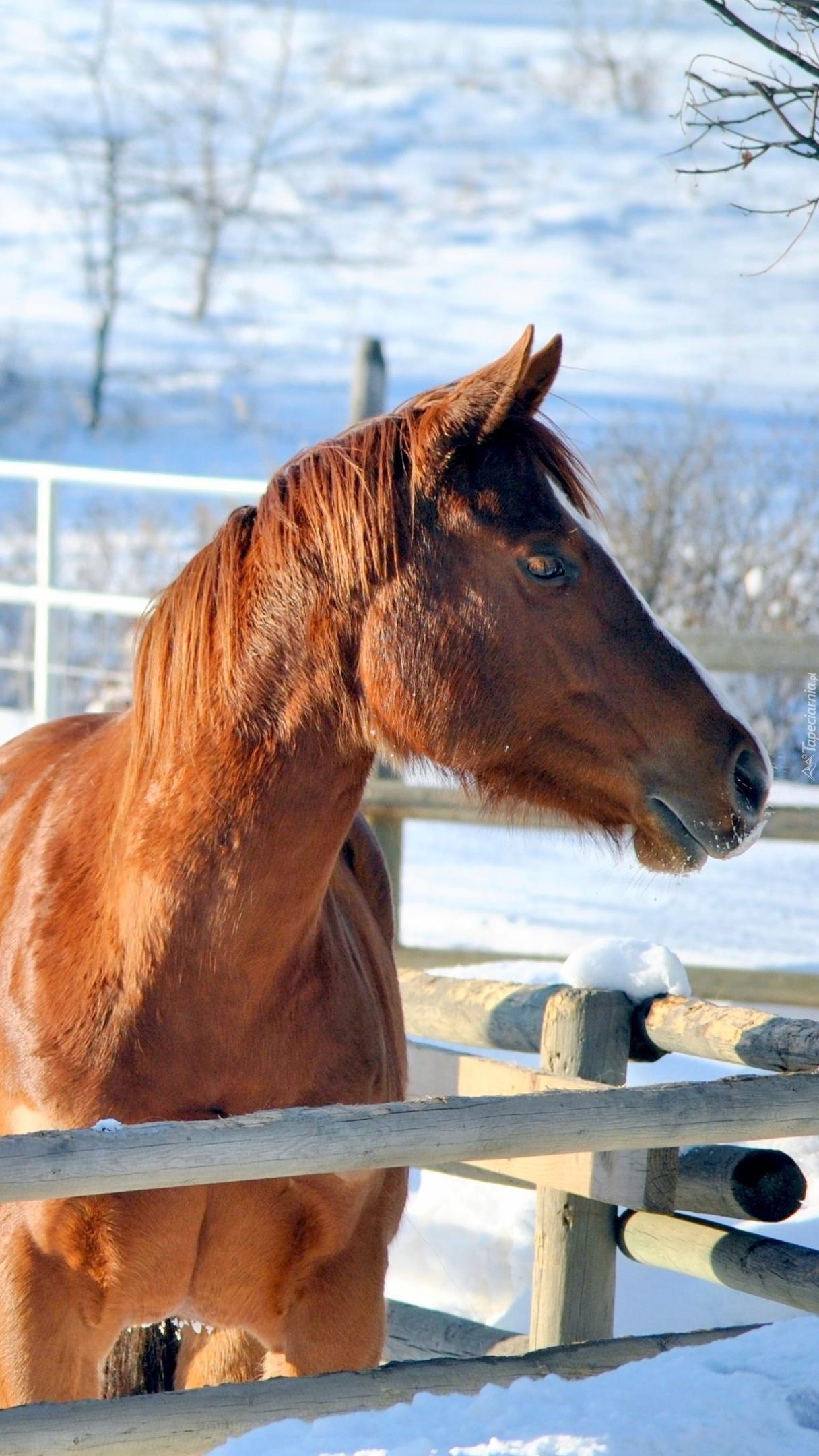 Koń w zagrodzie zimą