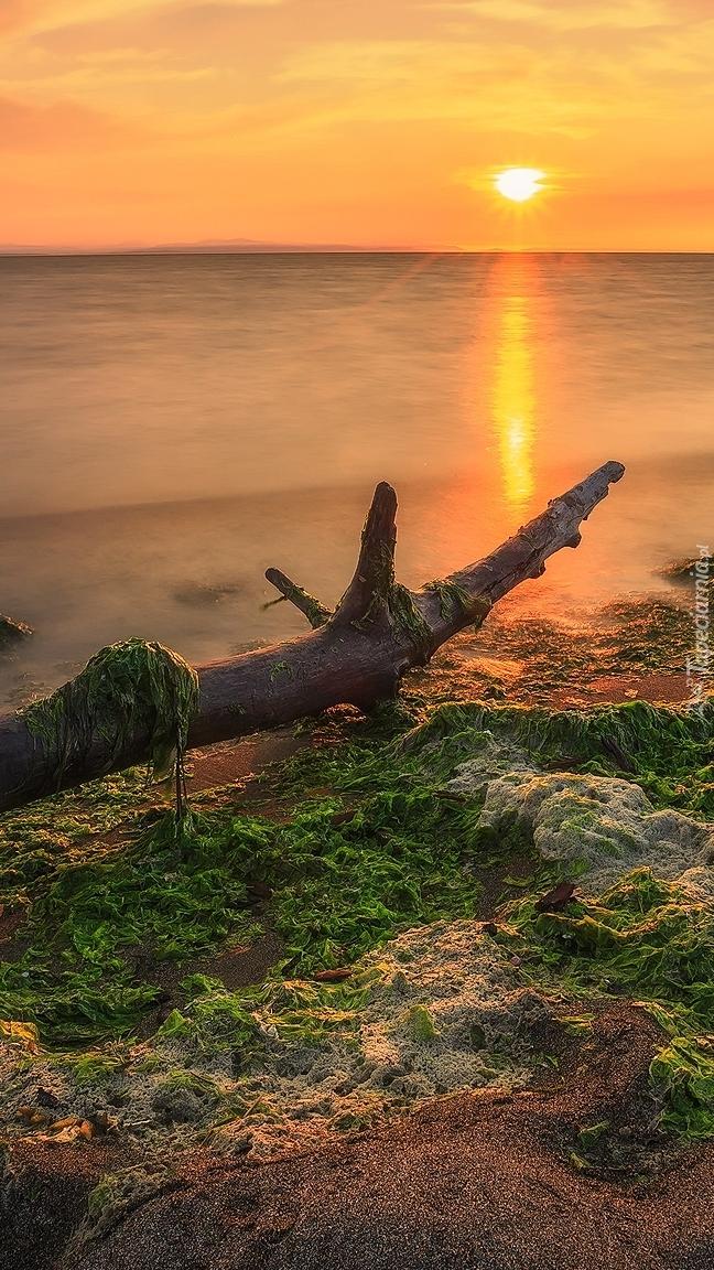 Konar na brzegu rzeki