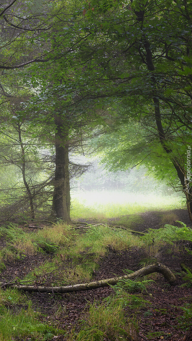 Konar na leśnej ścieżce