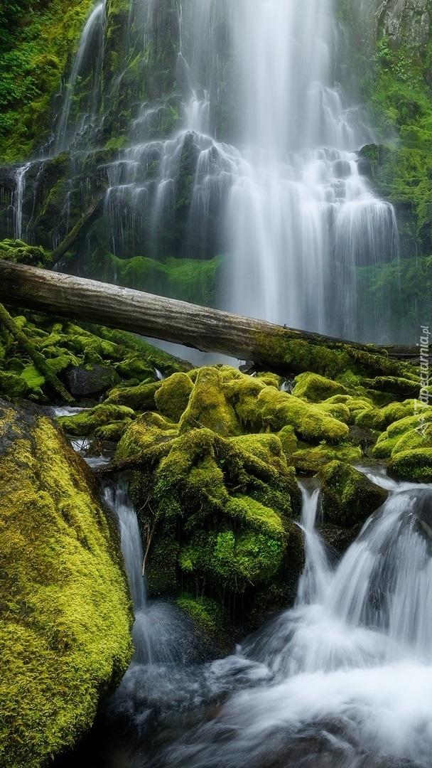 Konar na omszałych kamieniach przy wodospadzie
