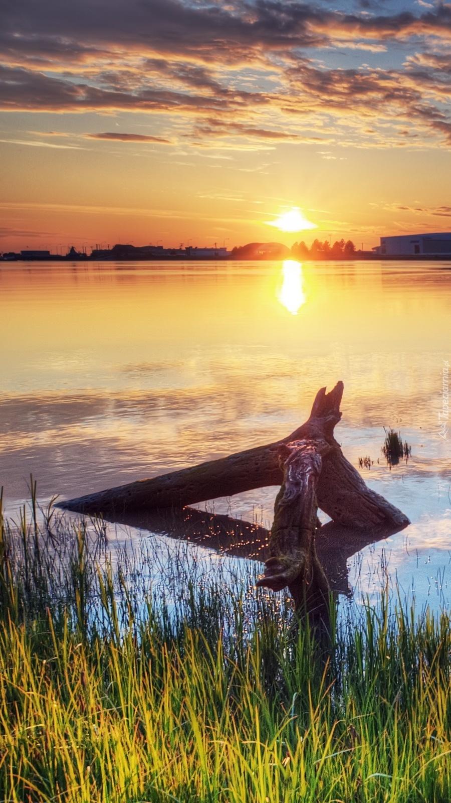Konar w jeziorze