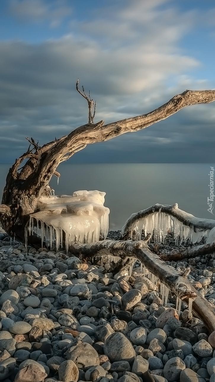 Konar z soplami lodu