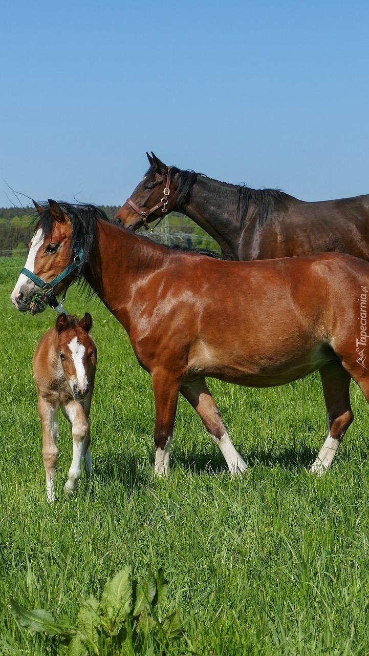 Konie i źrebak na pastwisku