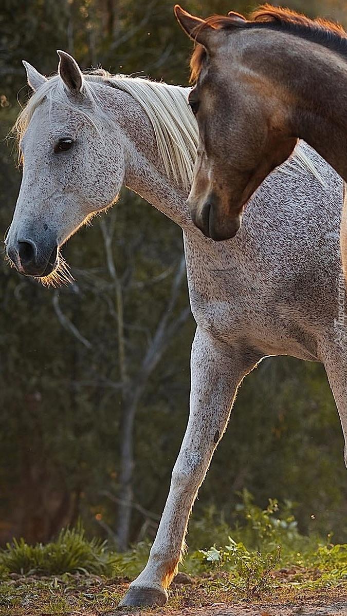 Konie na spacerze