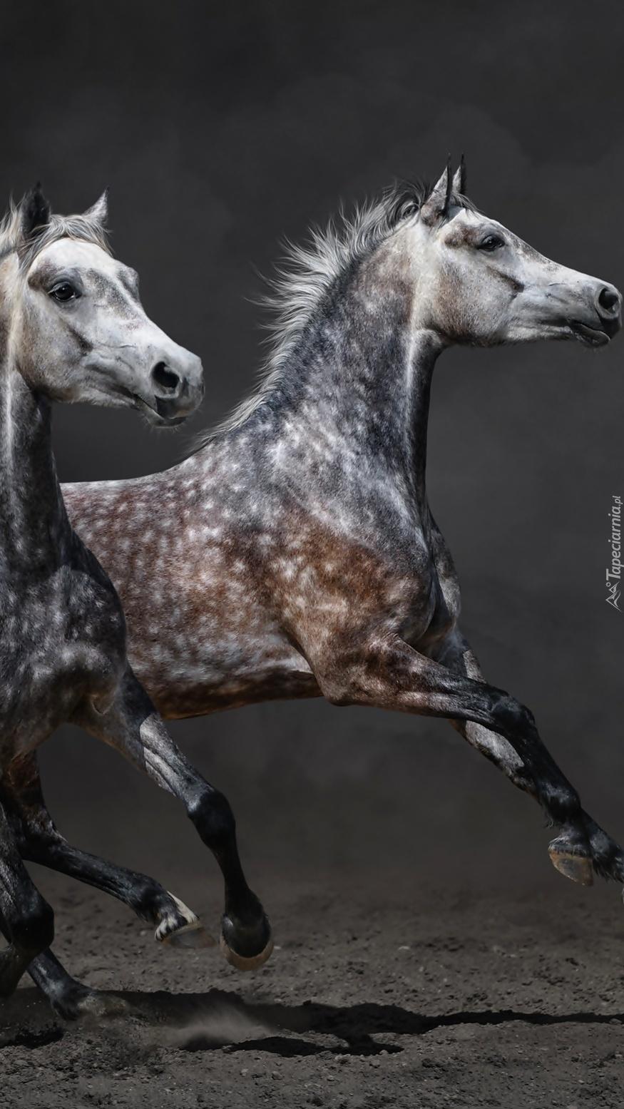 Konie w biegu