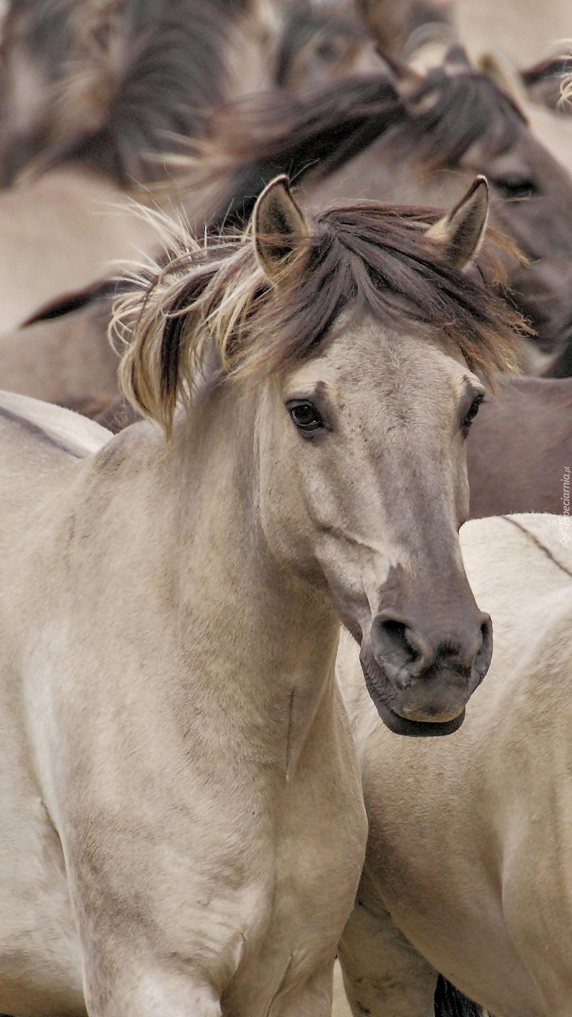 Konie w stadzie