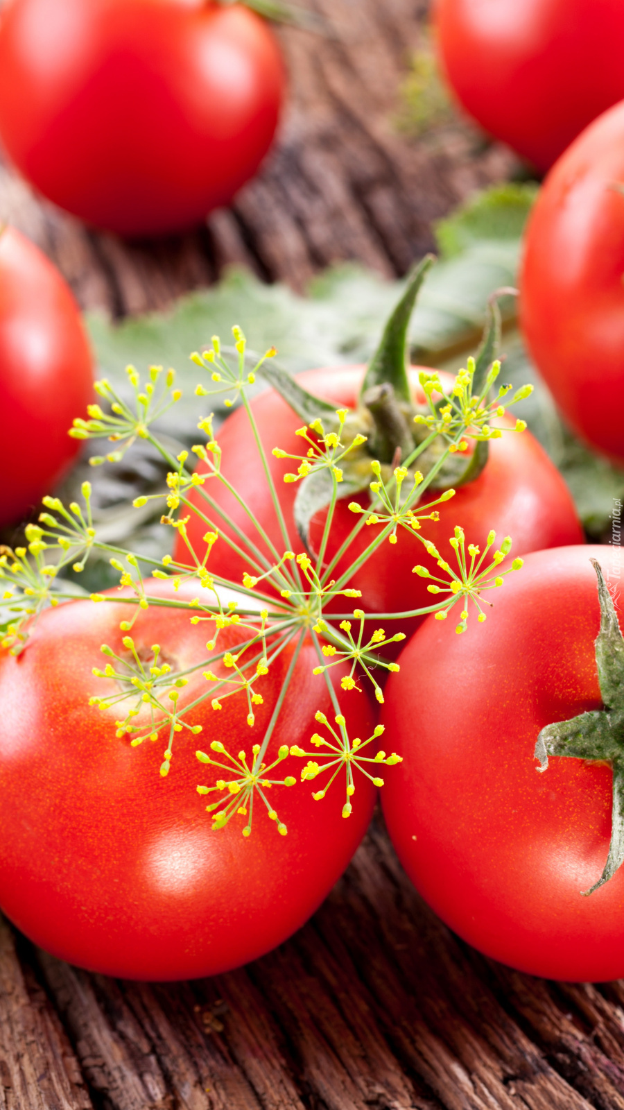 Koper na pomidorach