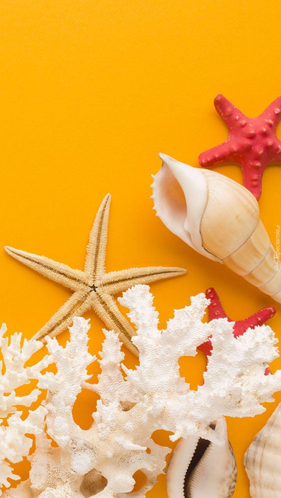 Koralowce i rozgwiazdy na żółtym tle