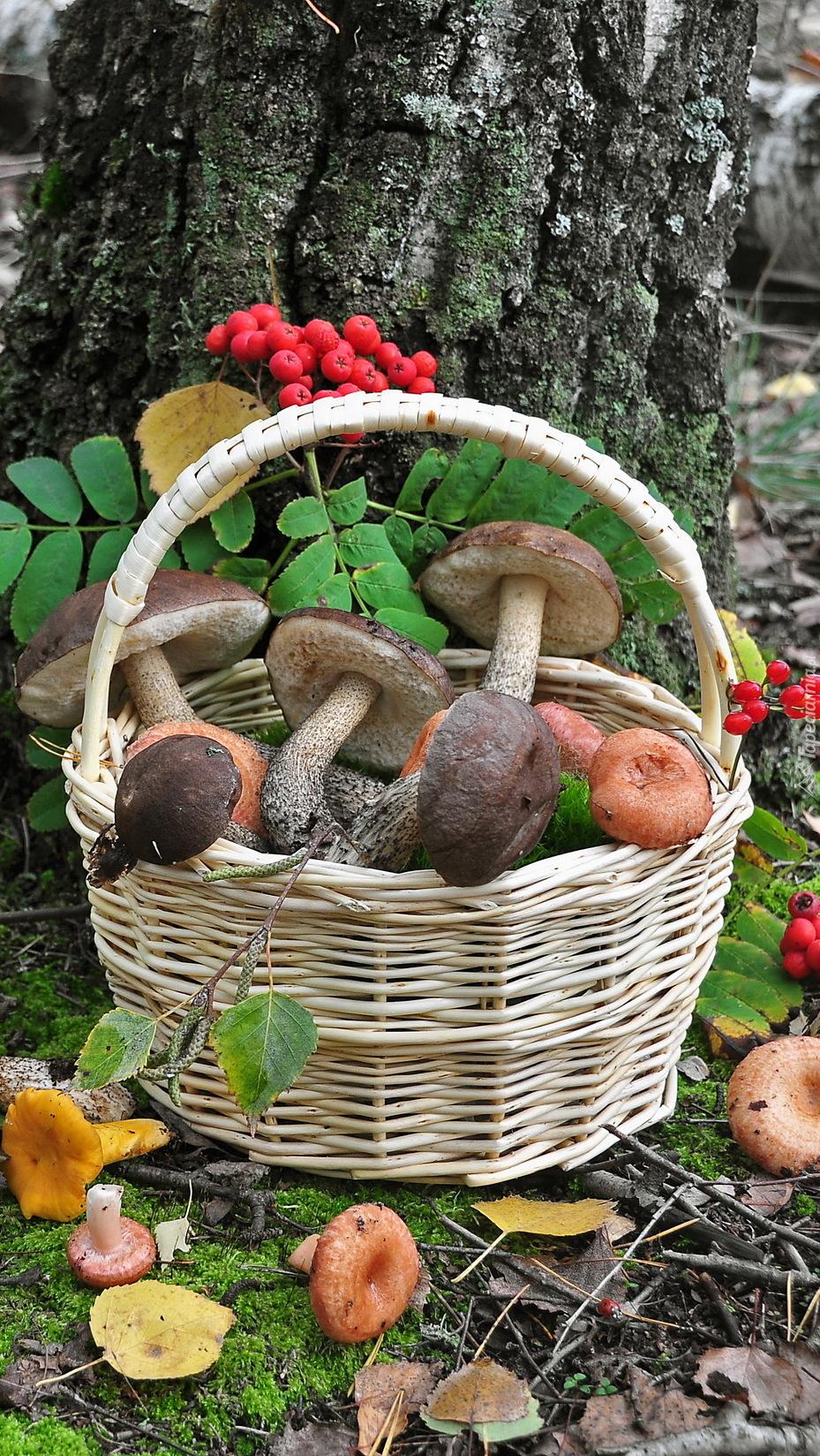 Kosz grzybów pod drzewem