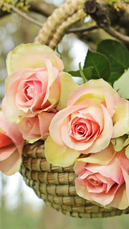Kosz z różami na gałęzi