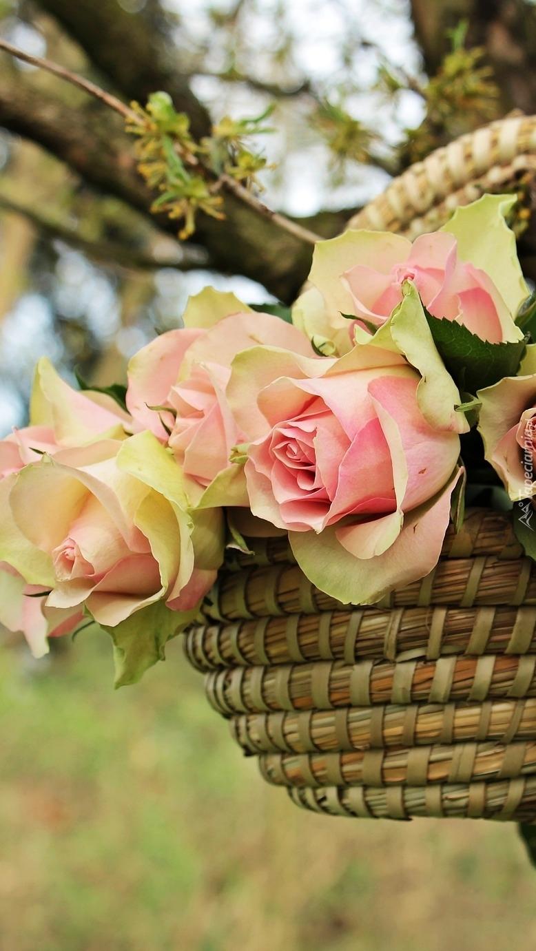 Koszyk z różami na drzewie