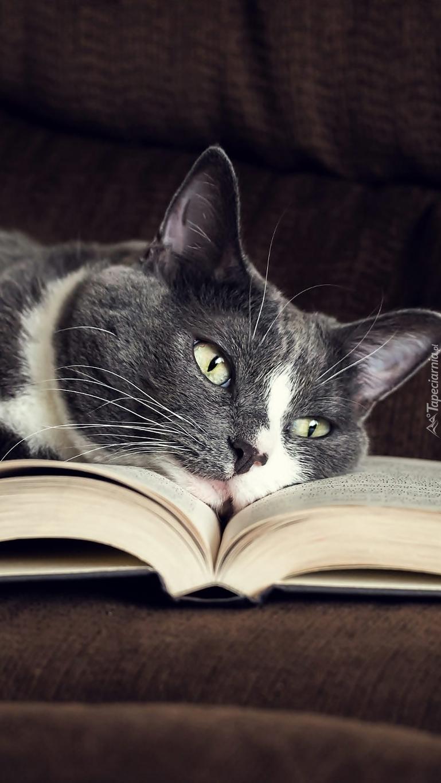 Kot leżący na otwartej książce