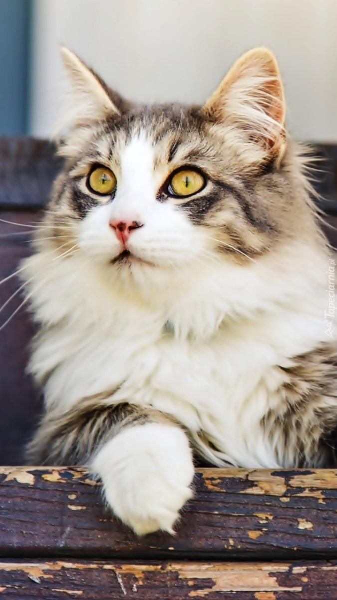 Kot Leży Na Schodach Tapeta Na Telefon