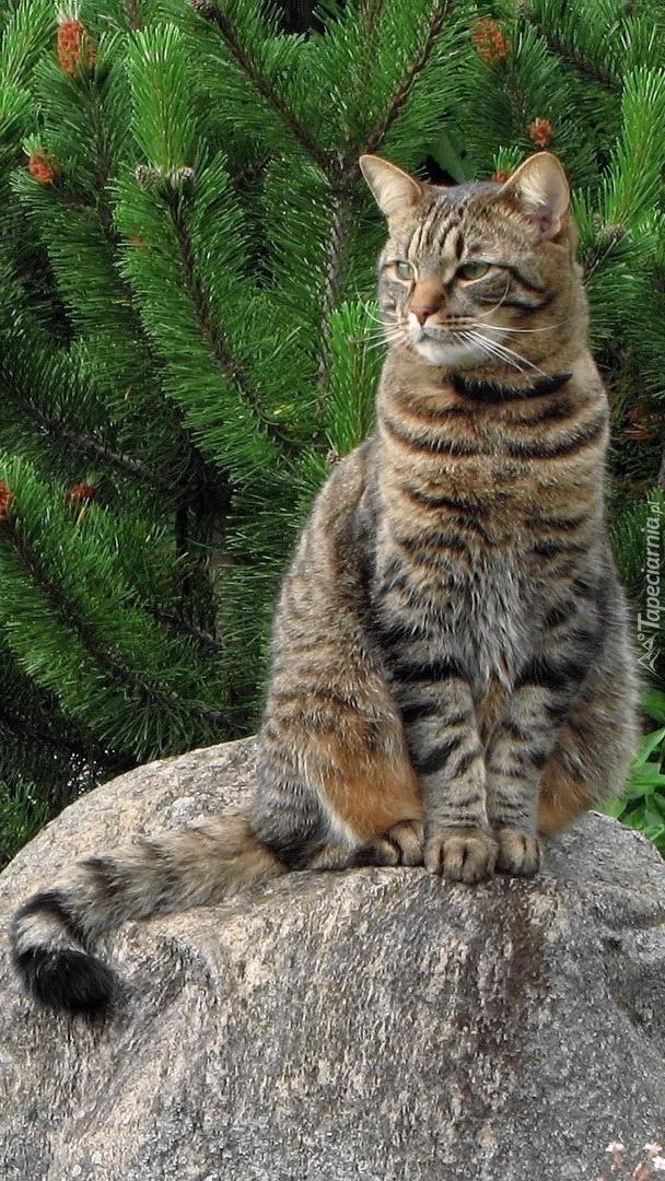Kot na kamieniu