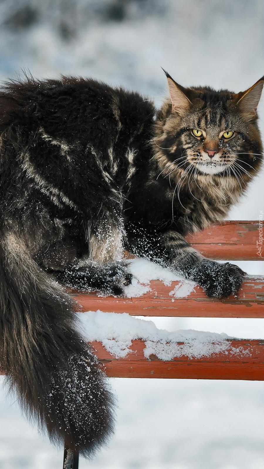 Kot na ławce w zimie