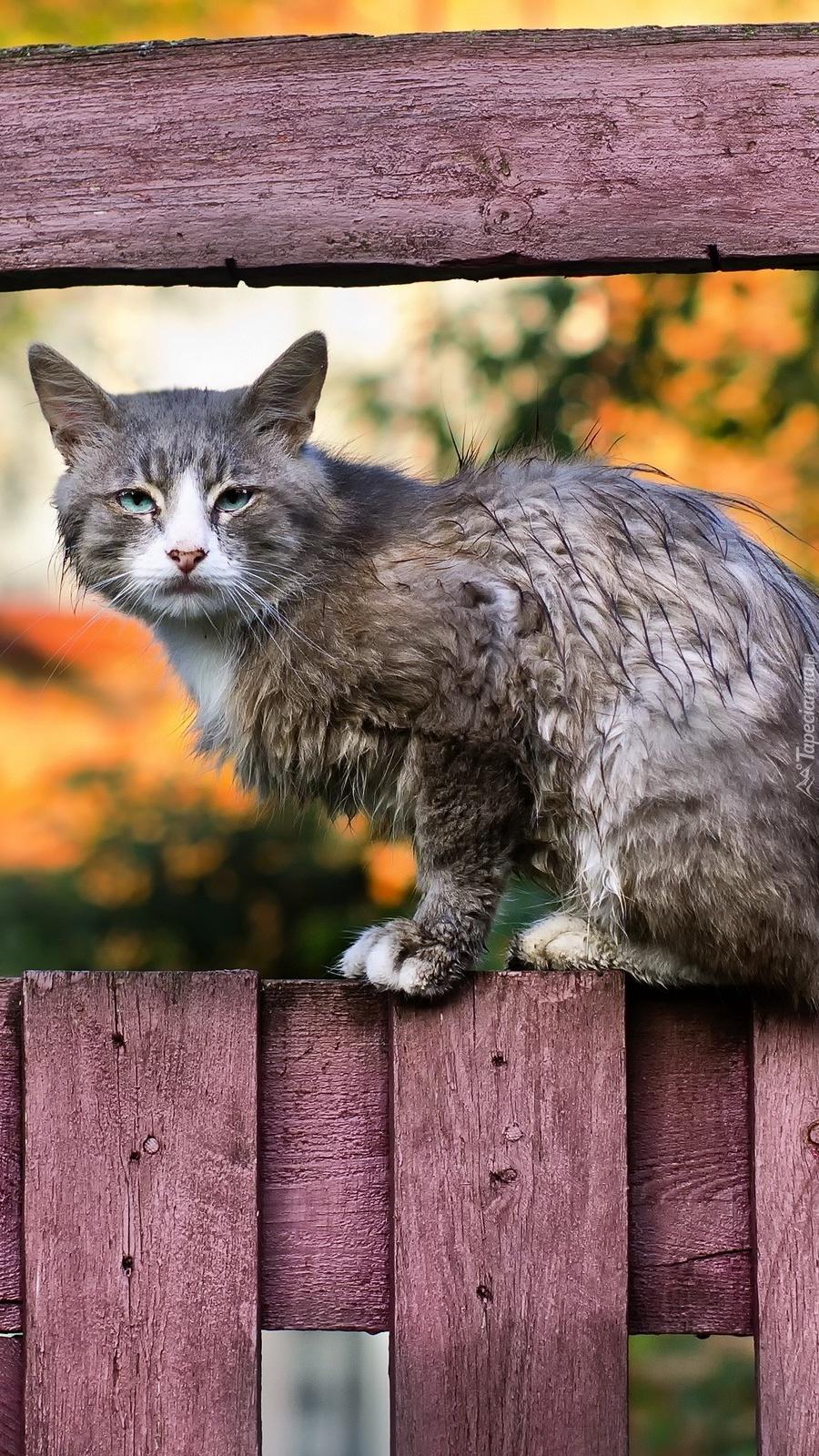 Kot na płocie
