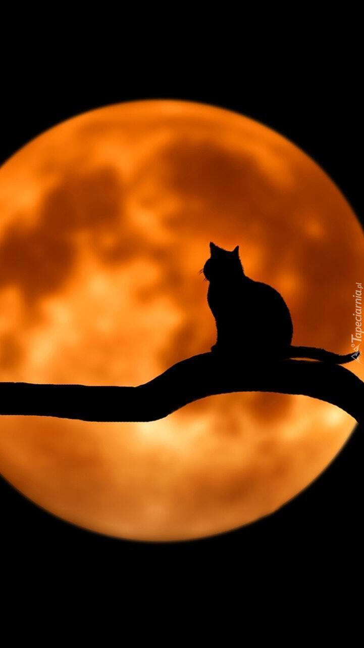 Kot na tle księżyca w 2D