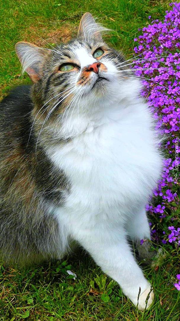 Kot na trawie zapatrzony w górę