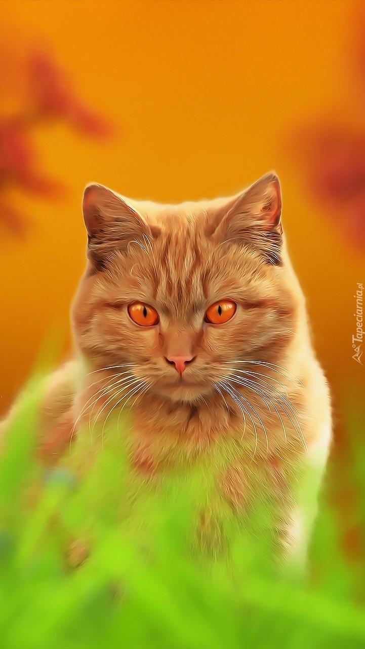 Kot o miodowych oczach