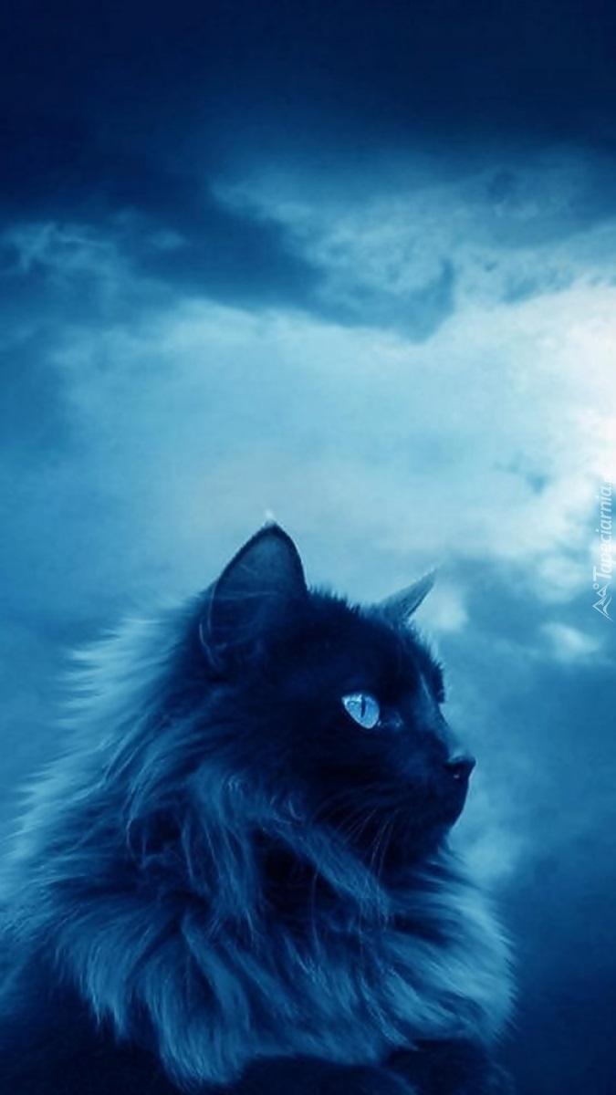 Kot o niebieskich oczach na tle chmur